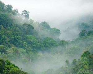 congo-rainforest01